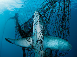 Are We In Danger Of Sleepwalking Into >> Our oceans are in crisis – here are 5 things we can do to save them - World - EBR
