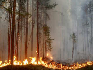 While fires are also raging in Russia, Norway and Finland, Sweden has seen the most extensive Arctic fires, which have forced four communities to evacuate, according to The Guardian.